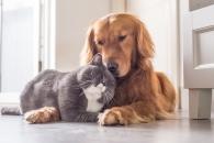 [알쏭달쏭+] 개와 고양이 중 어느 쪽이 더 똑똑할까?
