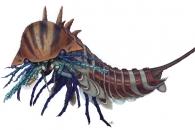 [와우! 과학] 5억 년 전 강력한 포식자 '하벨리아' 비밀 풀렸다