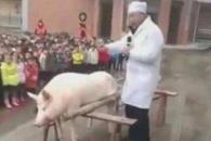 中 유치원생 600명 앞에서 돼지도살 논란, 이유가…
