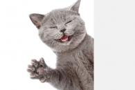 """""""수컷 고양이는 대부분 왼손잡이, 암컷은 오른손잡이"""" (연구)"""