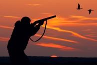 거위잡던 사냥꾼, 총맞고 하늘서 떨어진 거위에 '직격'