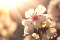 [알쏭달쏭+] 지구상에는 언제부터 꽃이 피기 시작했나?