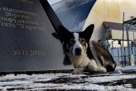 시간이 멈춘 체르노빌에 사는 '방사능 개'들의 사연