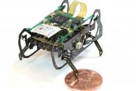 [와우! 과학] 로봇 혁신을 이끌 하버드의 바퀴벌레