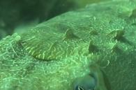 [와우! 과학] 몸에서 '3차원 돌기' 솟는 갑오징어의 비밀
