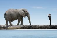 사회 생활하는 코끼리, 인간처럼 '한 성격' 한다 (연구)
