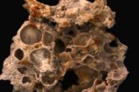 [와우! 과학] 16억 년 전 미생물이 만든 '공기 방울 화석' 발견