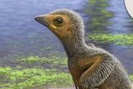 [와우! 과학] 익룡이 날던 1억 년 전 '아기 새' 화석 발견