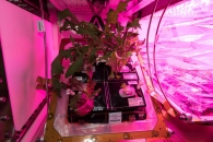 [우주를 보다] 메이드 인 스페이스…ISS서 재배한 상추 맛은?