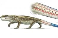 [와우! 과학] 도마뱀 특기 '꼬리 자르기' 언제부터 가능했을까?