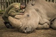 지구상 최후의 수컷 북부 흰코뿔소 '마지막 사진' 공개