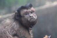 [모바일 픽!] '사람인 듯, 사람 아닌, 사람 같은' 원숭이 화제