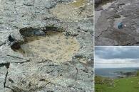 잃어버린 진화 고리?…스코틀랜드서 공룡 발자국 무더기 발견