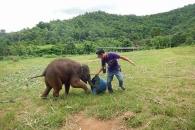 어린아이와 흡사한 웃음 소리내는 코끼리(영상)