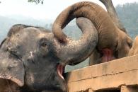 서커스서 구조된 눈먼 코끼리, 친구들과 첫 만남