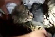 [여기는 남미] 감옥에 핸드폰 밀반입…고양이 배달부 적발