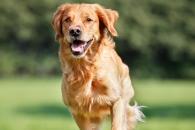[와우! 과학] 美 연구진, 개처럼 행동하는 AI(인공지능) 개발