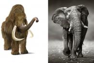 [와우! 과학] 매머드+코끼리 합친 신종 동물 출현?…하버드대 연구