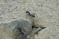 [와우! 과학] 사막 개미의 길찾기 비결…알고보니 '생체 나침반'