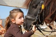 """""""말(馬)은 사람의 감정 읽고 기억할 수 있다"""" (연구)"""