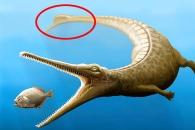 [다이노+] 돌고래 닮은 1억 8000만 년 전 '악어 조상' 발견
