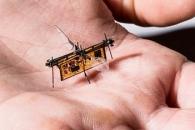 [핵잼 사이언스] 초소형 무선 곤충 로봇, 첫 날갯짓 펼쳤다