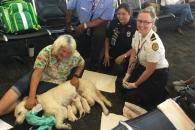 美공항서 여객기 기다리던 도우미견, 8마리 새끼 출산