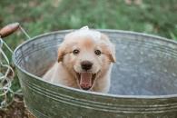 [반려독 반려캣] 상자 속 정체는 강아지!…유기견 입양 사진 화제