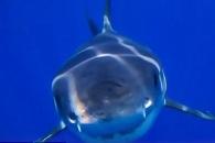 잠수 드론을 '꿀꺽'…우연히 들여다 본 상어의 입 속(영상)