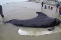 """80여개 비닐봉지 삼킨 고래, 결국 숨져…""""비닐 생산 멈춰야"""""""