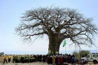 아프리카 '바오밥나무' 미스터리한 죽음 이어져 (연구)