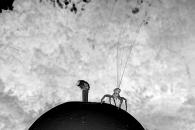 [와우! 과학] 날개없어도 수백㎞ 비행…거미는 어떻게 하늘을 날까?