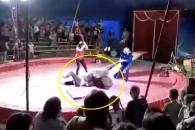 스케이트보드 타기 싫어…서커스 도중 조련사 공격한 곰 (영상)