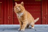 [여기는 중국] 월드컵 승리팀 예언 적중한 '점쟁이 고양이' 급사