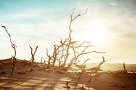 [와우! 과학] 5억년 전, 지구 역사상 최초로 온난화 유발한 주범