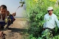 황폐한 땅이…40년 간 나홀로 나무 심어 숲으로 만든 남성