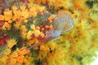 [와우! 과학] 해파리 잡아먹는 산호, 희귀 장면 포착 (영상)