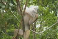 누가 원숭이에게 '비닐봉지'를 줬나…쓰레기에 몸살