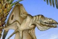 [다이노+] 2억 년 전 하늘 지배한 역대 가장 오래된 익룡 화석 발견
