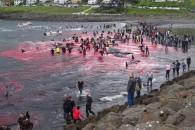 고래 피로 붉게 물든 바다…전통일까, 악습일까