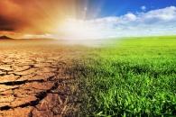 [와우! 과학] 지구 온난화가 해충의 식욕도 올린다