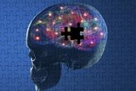 [와우! 과학] 알츠하이머 쥐의 기억력 되살리는데 성공 (연구)
