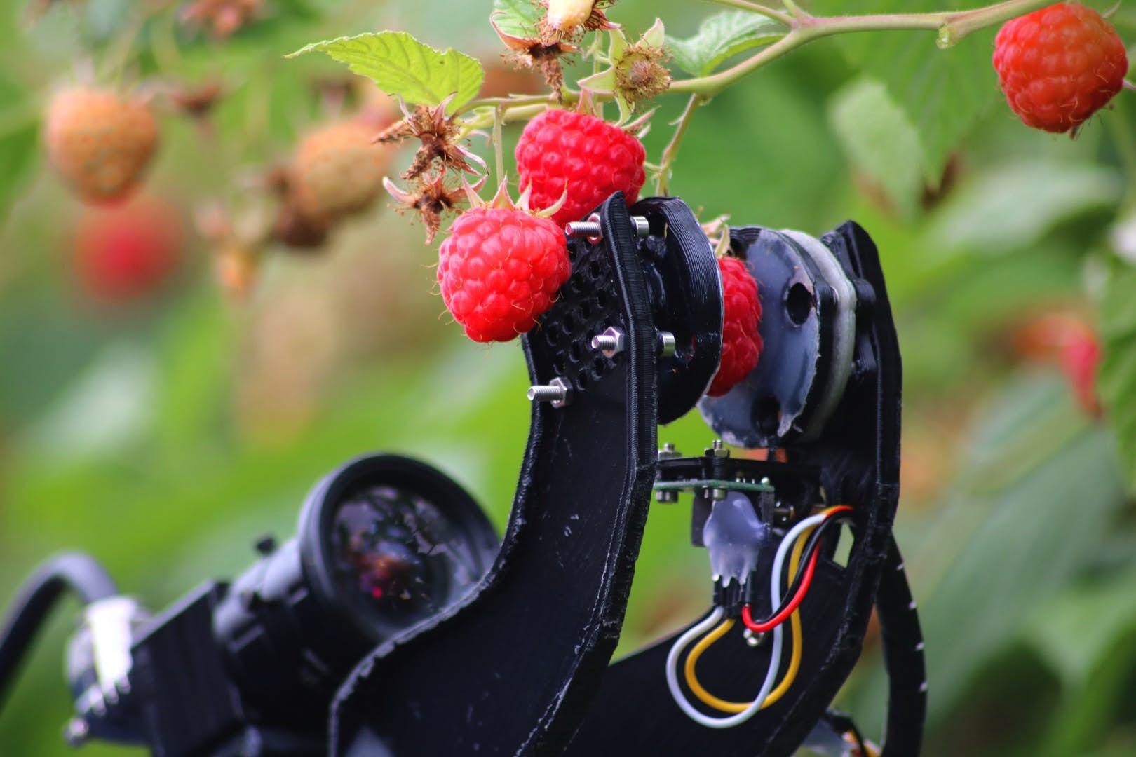 [와우! 과학] 라즈베리도 부드럽게 딴다…과일 수확 로봇 개발