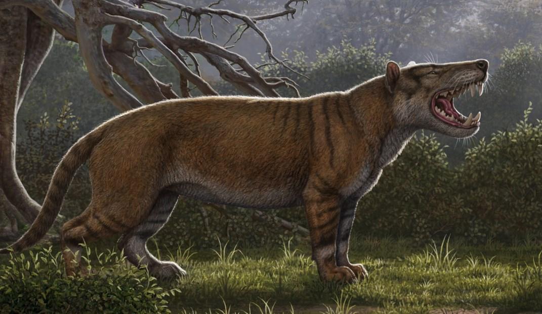 [와우! 과학] 사자보다 큰 신종 '최강 포식자'…박물관 서랍서 발견