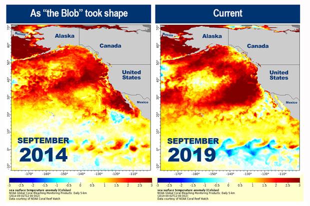 [와우! 과학] 북태평양서 새로운 '해양 열파' 감지…5년 전 악몽 재현?