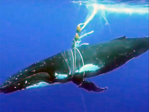 [안녕? 자연] 해양 생태계를 위협하는 '유령그물'을 아시나요?