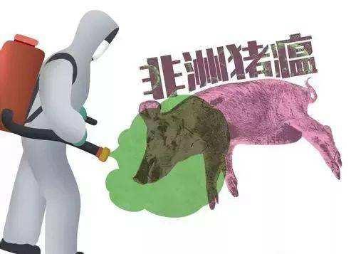 [여기는 중국] 中, 돼지열병 탓 치솟은 '돼지 값' 잡기에 총력