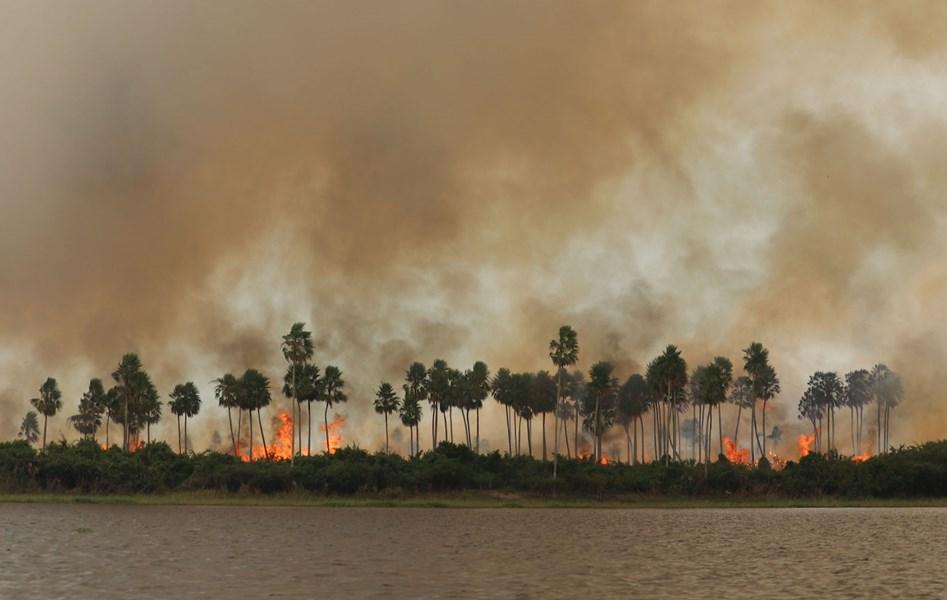 불타는 세계 최대 늪지 판타나우…올해 화재건수 역대 최다 돌파