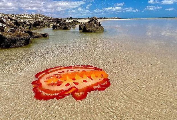 매혹적 빛깔 뽐내며 꿈틀…'춤추는 바다생물' 호주서 포착
